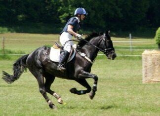 Sport equestri non olimpici